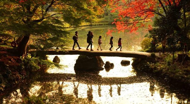 Foliage a Tokyo - Rikugien Garden (foto di TCVB - Elisa Eterno)