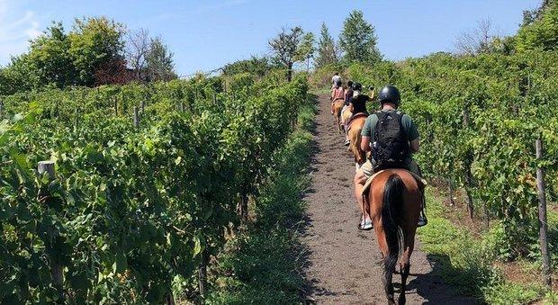 Turisti a cavallo tra i vigneti del Vesuvio in Campania
