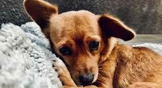 Il cane ha vegliato per giorni la padrona morta