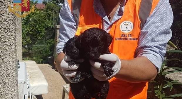 I due cuccioli ritrovati nel canile abusivo