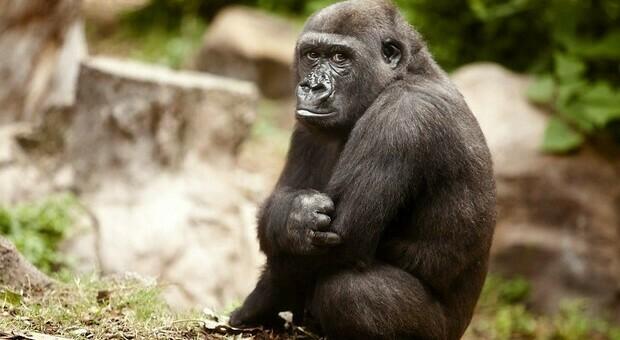 In meno di 50 anni persi quasi i due terzi della fauna selvatica. L'allarme lanciato dal WWF. (immagine pubbl da Ansa)