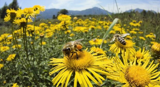 Attaccato da uno sciame di api, cacciatore muore per choc anafilattico