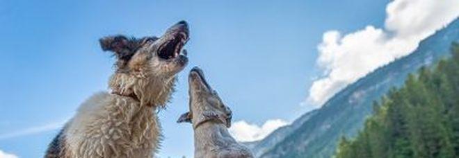 Patentino cani, troppe fake news. Arriva il corso Ordine Medici Veterinari di Roma e provincia