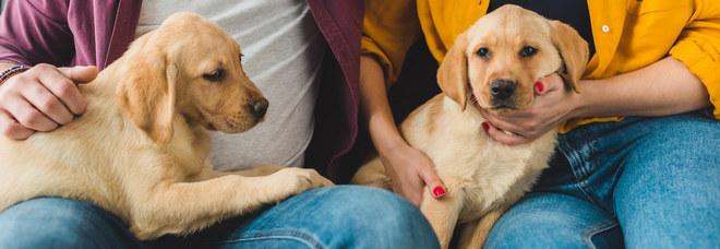 """Addio """"Fido"""", gli italiani per scegliere i nomi dei loro cani ora si affidano a Serie Tv e personaggi famosi. ECCO LA TOP TEN"""