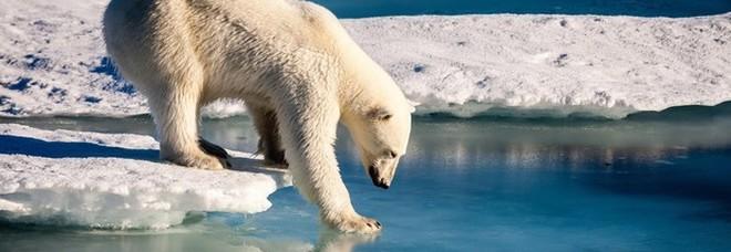 Invasione di orsi in un villaggio russo: colpa del riscaldamento globale. Gli abitanti: «Ce li siamo trovati di fronte»