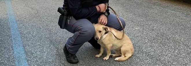 Roma, cagnolina legata a un palo sotto il sole, la polizia salva la piccola «Maggie»