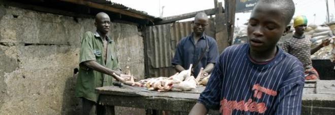 Nigeriani lavorano dei polli